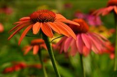 Colores perfectos de la naturaleza Fotos de archivo libres de regalías