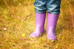 Colores rain boot, autumn enviroment. Violet colores rain boots in the forest, autumn enviroment Stock Photography