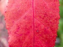 Colores rojos y verdes de la caída y hojas caidas imágenes de archivo libres de regalías