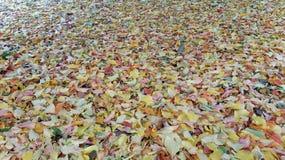 Colores tempranos del invierno Imágenes de archivo libres de regalías