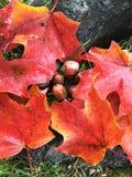 Colores vibrantes de la caída Fotografía de archivo libre de regalías
