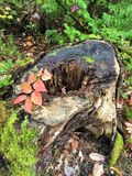 Colores vibrantes de la caída Imagen de archivo libre de regalías