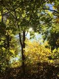 Colores vibrantes de la caída Imagen de archivo