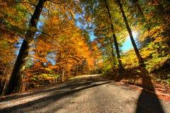 Colores vibrantes del bosque en otoño Imágenes de archivo libres de regalías