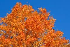 Colores vibrantes del otoño Foto de archivo libre de regalías