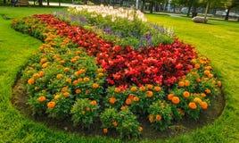 Colores vivos de flores en parque público fotografía de archivo libre de regalías