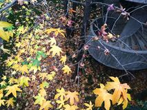 Colores y arquitectura del otoño Imagen de archivo libre de regalías