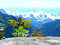 Colores y montañas en Suiza fotografía de archivo libre de regalías