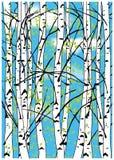 Colorez l'illustration de vecteur des arbres de bouleau et du ciel bleu avec les nuages blancs photo libre de droits