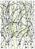 Colorez l'illustration de vecteur de la forêt d'arbres de bouleau de ressort photographie stock libre de droits