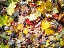 Colorez le fond texturisé de feuilles d'automne images libres de droits
