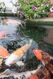 colorez le jaune rouge-rose orange vert drôle de poissons Images stock