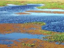 Colorez le marais Photographie stock