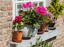 Colorflul blooming plants on a windowsill Royalty Free Stock Image