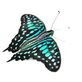 Colorfu Butterfly Stock Photography