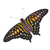 Colorfu Butterfly Stock Image