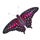 Colorfu Butterfly Royalty Free Stock Photo