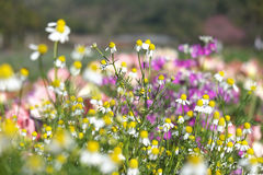 Colorfu flowers field Stock Images