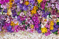 Colorfu-Orchidee Stockfotografie