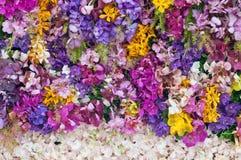 Colorfu orkidé Arkivbild