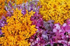 Colorfu orkidé Royaltyfri Fotografi