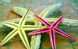 Colorfu pink yellowl sea stars in  gray hues. Colorful pink yellow sea stars, in violet, gray and beige hues on pavement. Fish image. Sea and concept image Royalty Free Stock Photos