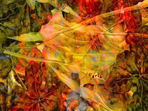 Colorful Abstract Illustration-5. Unique and colorful abstract illustration of reds, oranges, and greens, suitable for a background Stock Image