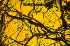 Colorful, abstract pattern of mineral in a polarizing micrograph. Neuron-like cracks in a thin section of peridotite rock in an abstract, polarizing micrograph Stock Image