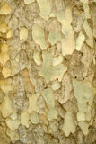 Colorful abstract pattern of old tree bark Stock Photos
