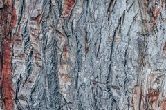 Colorful abstract pattern texture of tree bark. stock photo