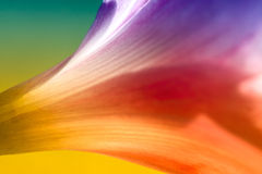 Colorful Abstract Rain Lily Royalty Free Stock Photos