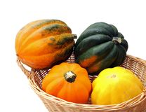 Colorful acorn squash in basket Stock Image
