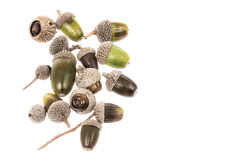 Colorful acorns isolated on white. Some acorns isolated on white stock photography