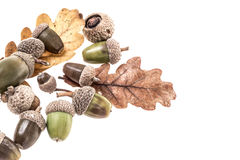 Colorful acorns isolated on white Stock Images