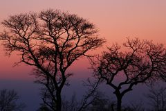 African sunset in the Kruger National Park, South Africa Stock Image