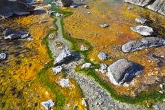 Colorful Algae at Lake Bogoria, Kenya Stock Photo
