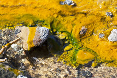 Colorful Algae at Lake Bogoria, Kenya. Colorful algae around hot springs at Lake Bogoria in Kenya Stock Images