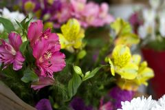 Colorful Alstroemeria flowers. A large bouquet of multi-colored alstroemerias in the flower shop are sold in the form of a gift bo. X. Close up royalty free stock photography