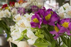 Colorful Alstroemeria flowers. A large bouquet of multi-colored alstroemerias in the flower shop are sold in the form of a gift bo. X stock images