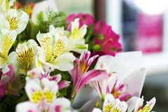 Colorful Alstroemeria flowers. A large bouquet of multi-colored alstroemerias in the flower shop are sold in the form of a gift bo. X stock image
