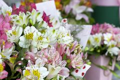 Colorful Alstroemeria flowers. A large bouquet of multi-colored alstroemerias in the flower shop are sold in the form of a gift bo. X stock photo