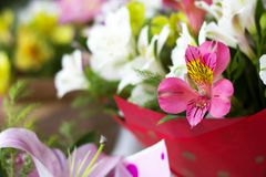 Colorful Alstroemeria flowers. A large bouquet of multi-colored alstroemerias in the flower shop are sold in the form of a gift bo. X. Close up royalty free stock image
