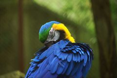 Colorful amazon parrot stand on the tree Stock Images