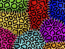 Colorful animal skin. Background of colorful animal skin Royalty Free Stock Photography