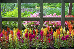 Colorful Annuals Stock Photos