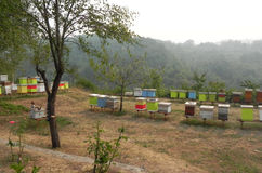 Colorful apiary in the mountains. Colorful bright apiary in a monastery in the mountains of Montenegro Stock Photography
