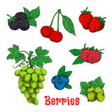 Colorful appetizing fruits and berries sketches Stock Photo