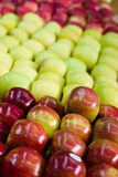Colorful apples Stock Image