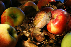 Colorful apples and leaves Stock Photos