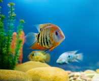 Colorful  aquarium Stock Images